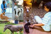 Preetisheel Singh feeds animals in Pathankot