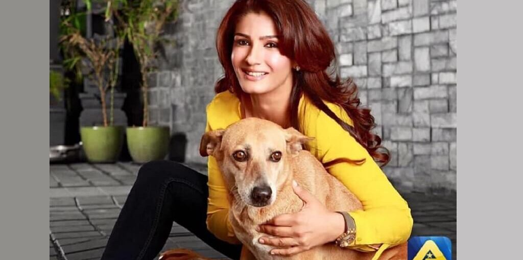 Raveena R Tandon on animal cruelty
