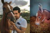 Randeep Hooda's horse